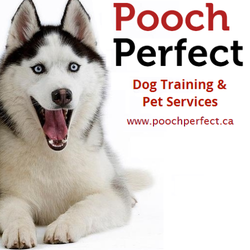 pooch perfect   pet training   hamilton on   phone number