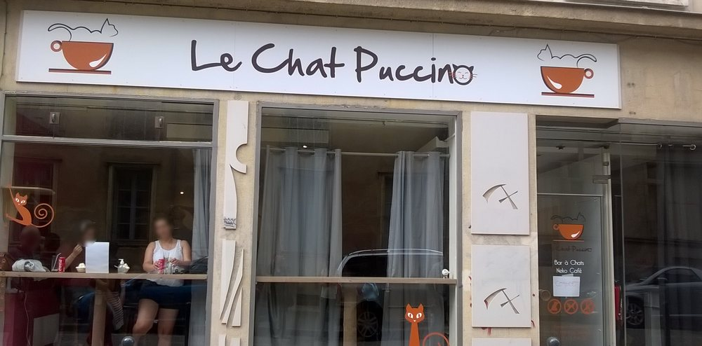 Le chat puccino caf s th me 1 rue des francs for Restaurant o 23 rennes