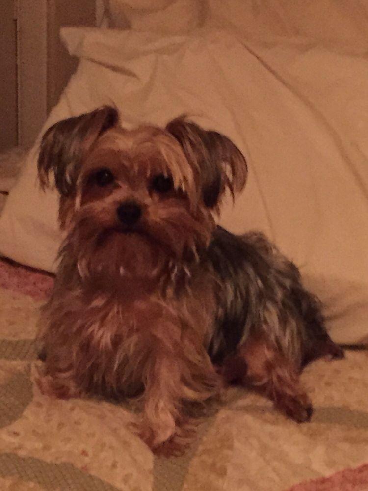 Carol's Dog Grooming: 2610 Highland Ave, Broomall, PA