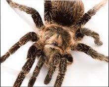 ARC Termite And Pest Control: 12135 Buffington Ln, Riverview, FL