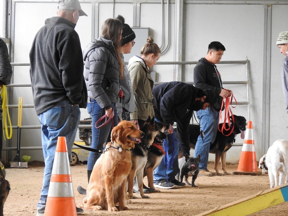 All About Dog Obedience: Hwy 193, Newcastle, CA