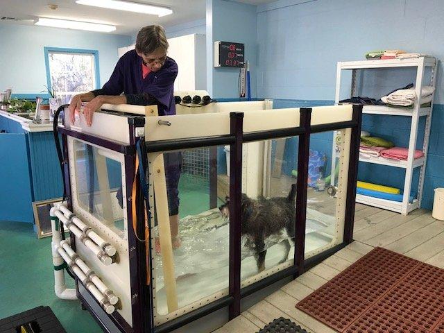 Loving Touch Animal Center