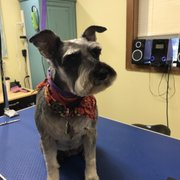 Cute cuts 13 photos 15 reviews pet groomers 1011 se walnut bella photo of cute cuts hillsboro or united states ellie solutioingenieria Images