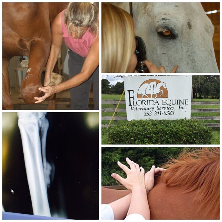 Florida Equine Veterinary Services: 19801 County Rd 561, Clermont, FL