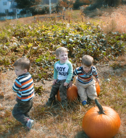 Wynnorr Farm Fall Harvest Festival: 1631 East Street Rd, Glen Mills, PA