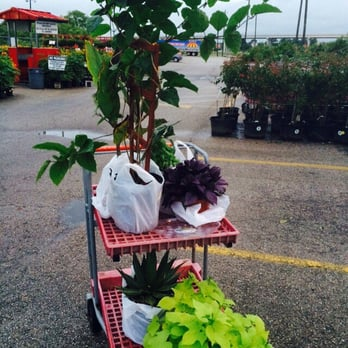 Houston garden centers 11 reviews discount store 13403 south fwy south acres crestmont Houston garden centers houston tx