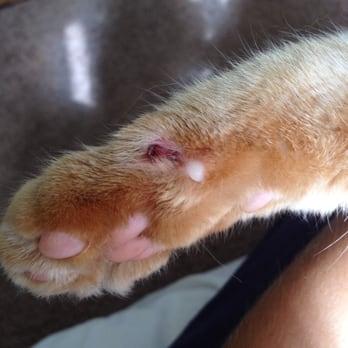 Cat Grooming Long Beach Ca