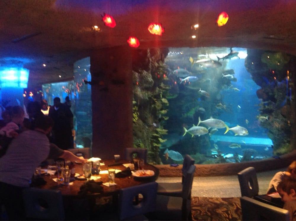 Fun At The Aquarium Restaurant In Nashville Tn Yelp