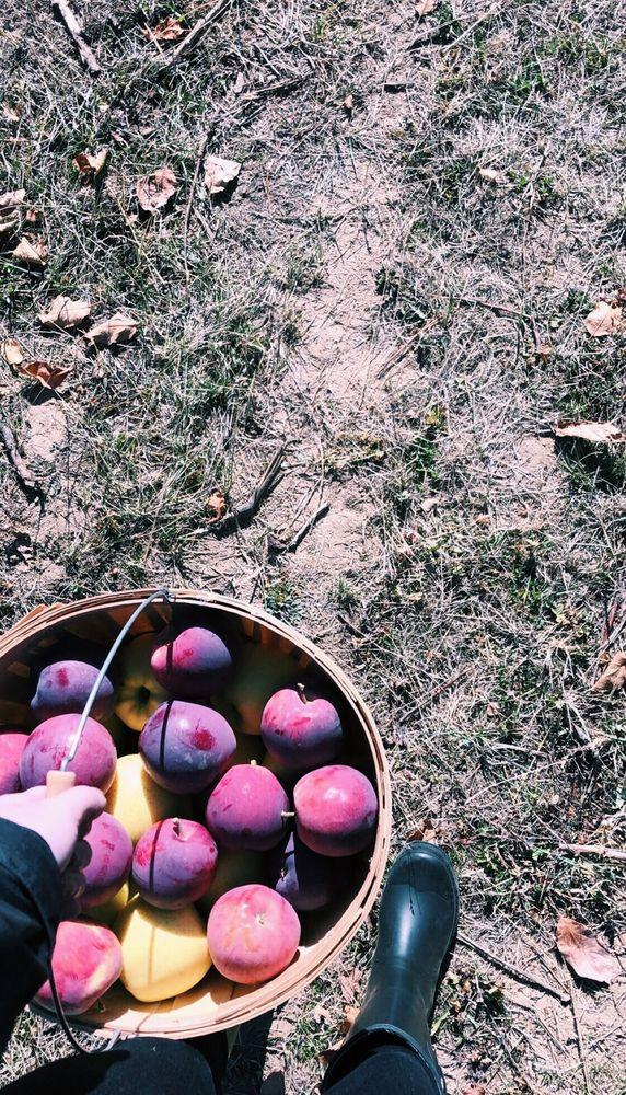 Hansen's Green Bluff Orchard: 8215 E Green Bluff Rd, Colbert, WA
