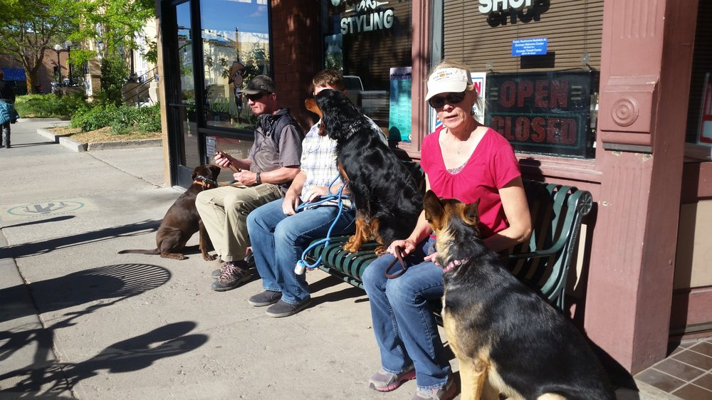 Diane's Clever K9s: Bayfield, CO