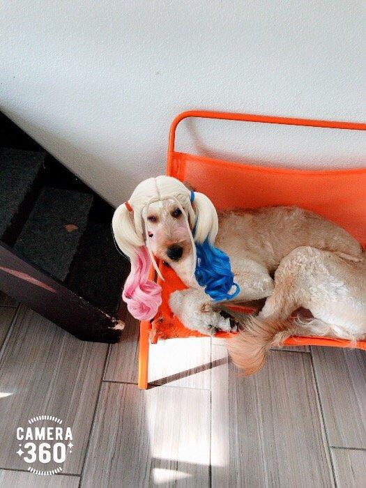 Happy Dog Grooming - 262 Photos & 42 Reviews - Pet ... - photo#38