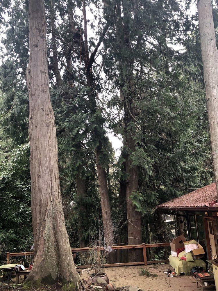 Atlas Tree Care