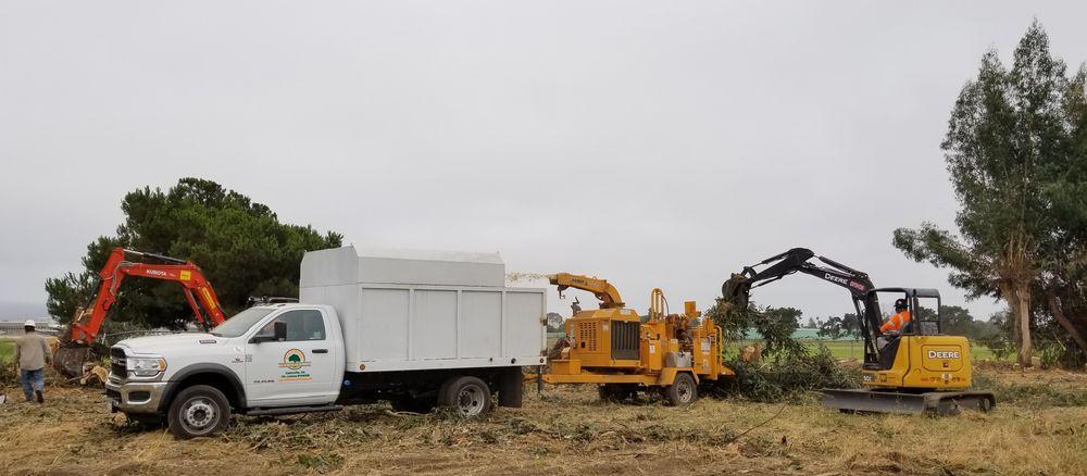 Rodriguez Tree Service: Monterey, CA