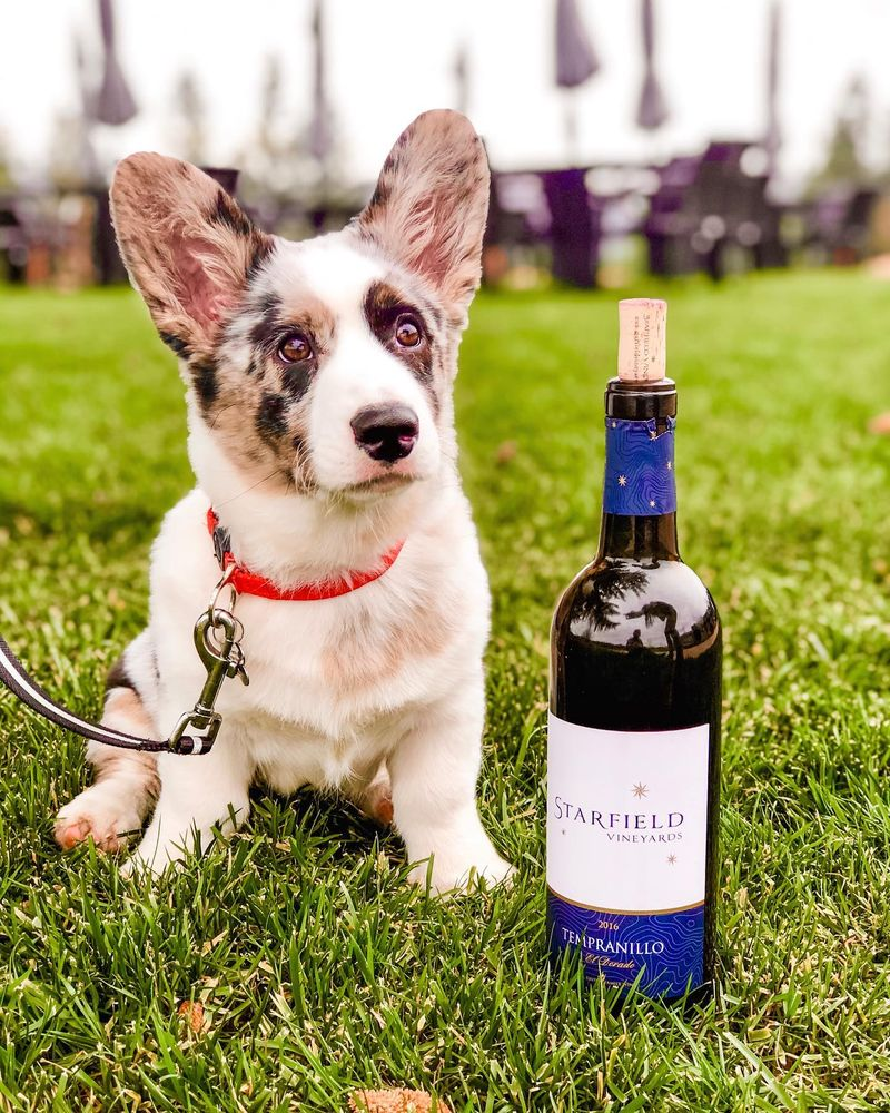 Starfield Vineyards: 2750 Jacquier Rd, Placerville, CA