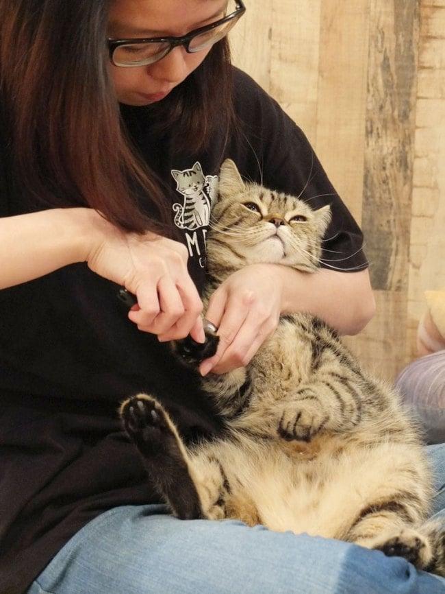 Meomi Cat Cafe