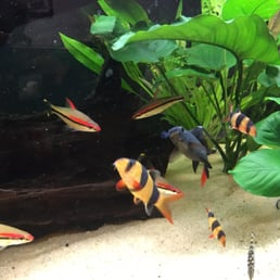 Foto su 405 tropical fish yelp for 405 tropical fish