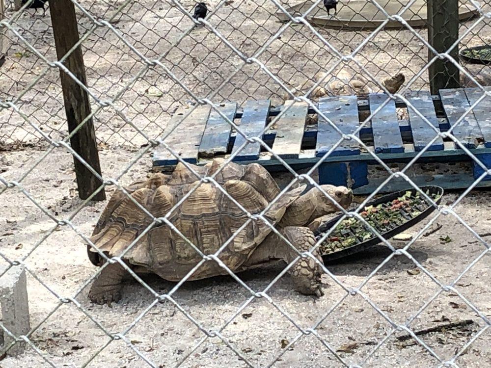 Octagon Wildlife Sanctuary: 41660 Horseshoe Rd, Punta Gorda, FL