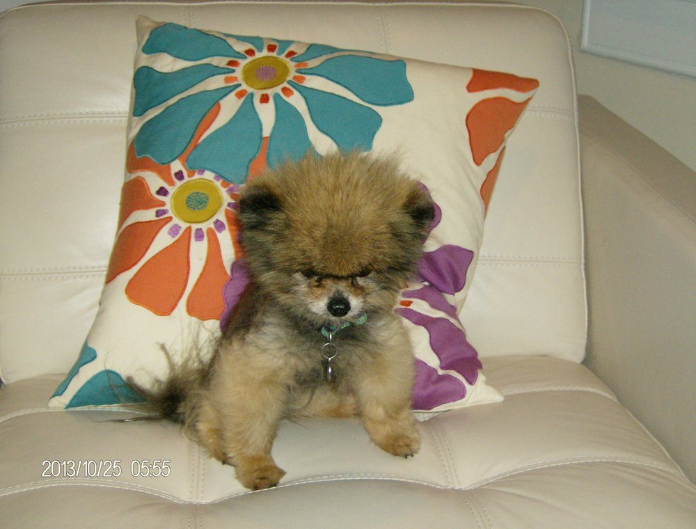 Cocalico Pet Companion: 1291 Cocalico Rd, Birdsboro, PA