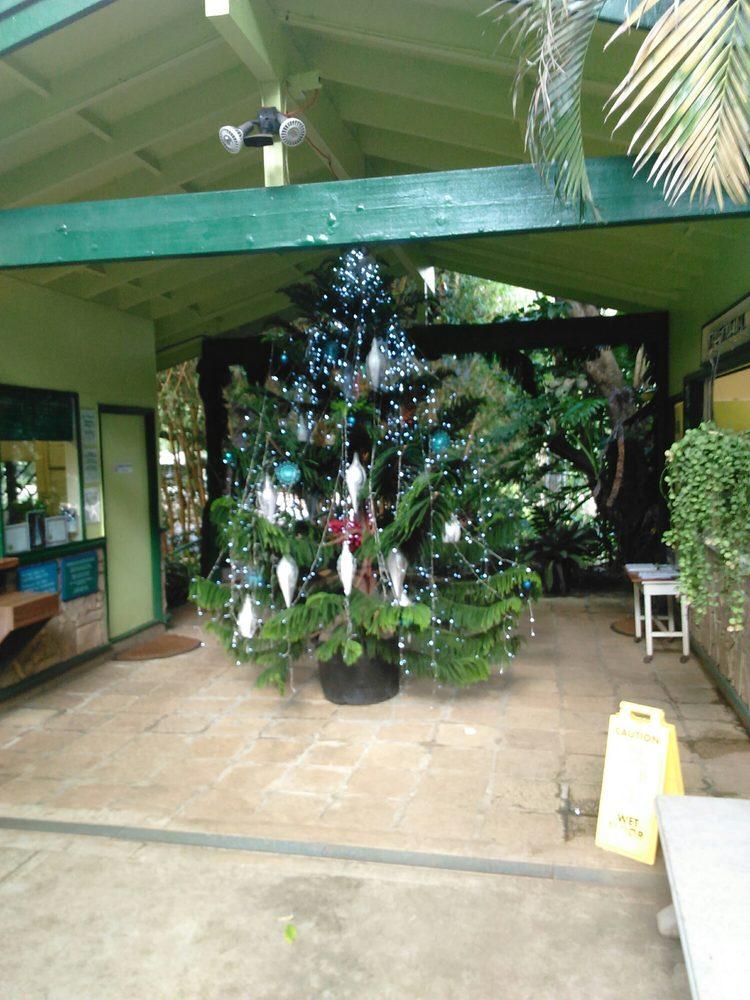 Cook pine christmas tree yelp for Foster botanical garden honolulu