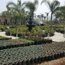 Photo Of Sterling Gardens Nursery Moorpark Ca United States Is