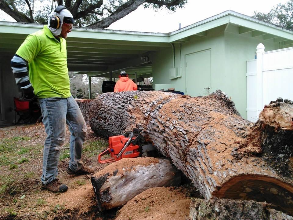 Mike Herronen Tree Service: Fort Myers, FL