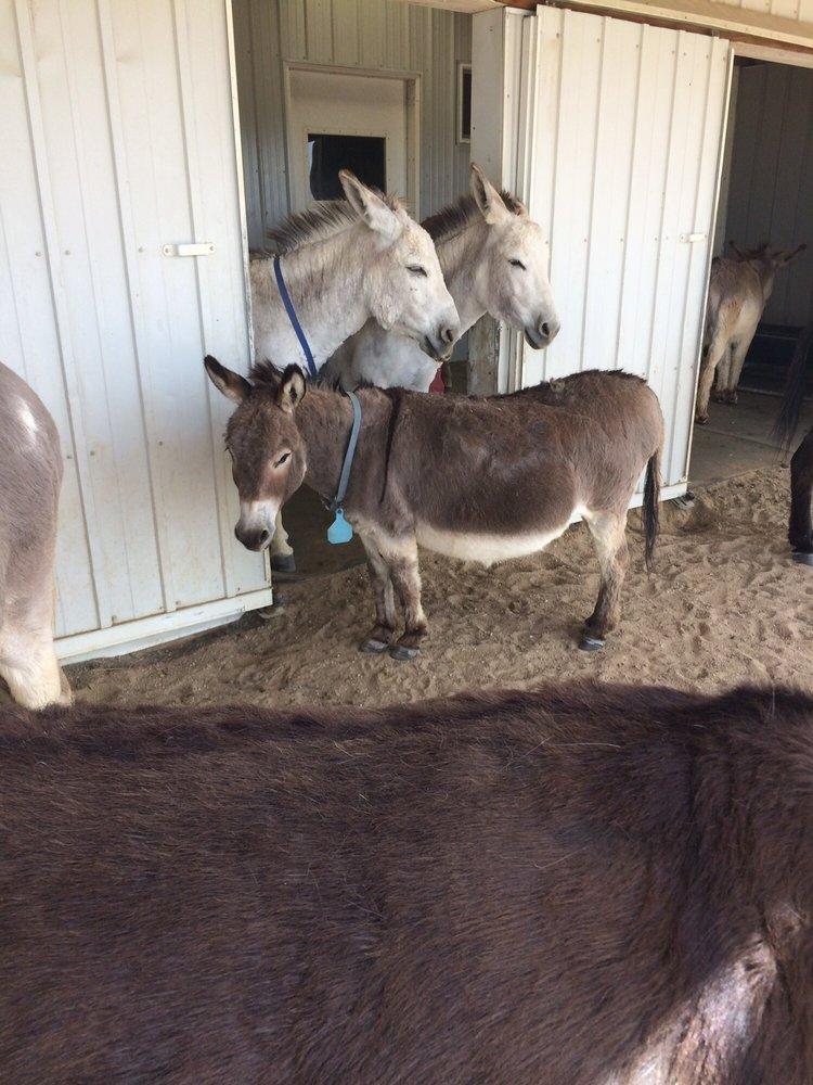 Longhopes Donkey Shelter: 66 N Dutch Valley Rd, Bennett, CO