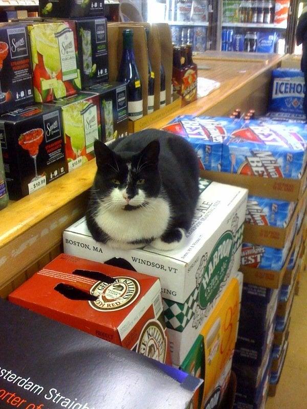 Kettering Liquors & Cheese Shoppe: 10682 Campus Way S, Upper Marlboro, MD