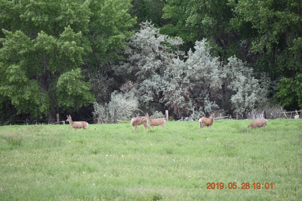 Salina Creek RV Camp: 1385 S State St, Salina, UT