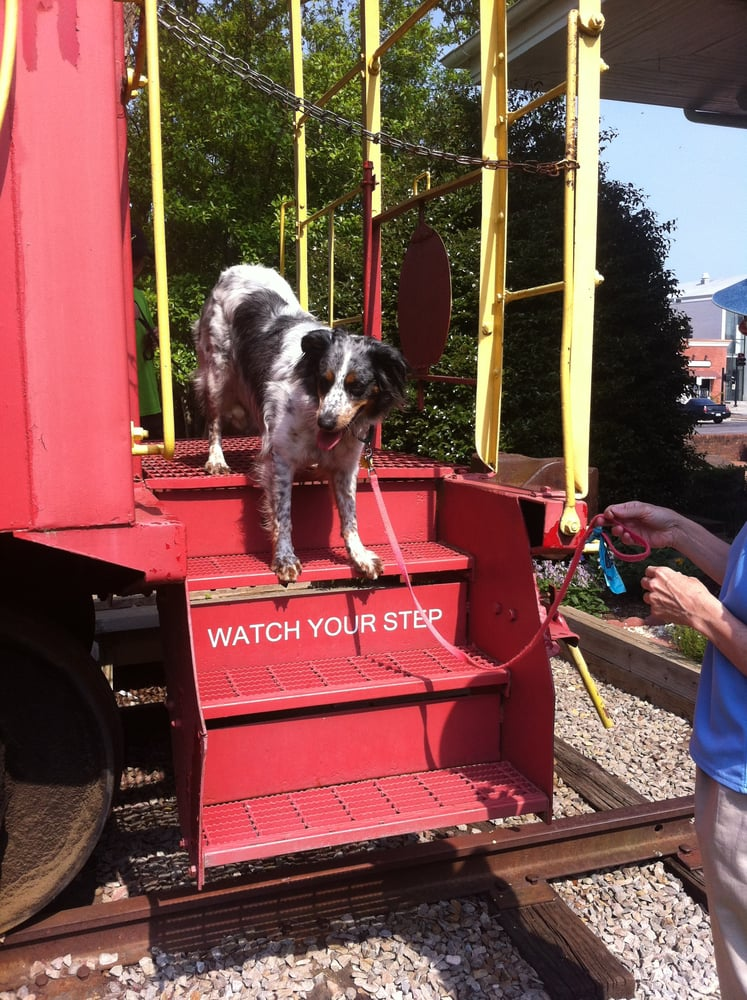 Dog Training Apex Nc