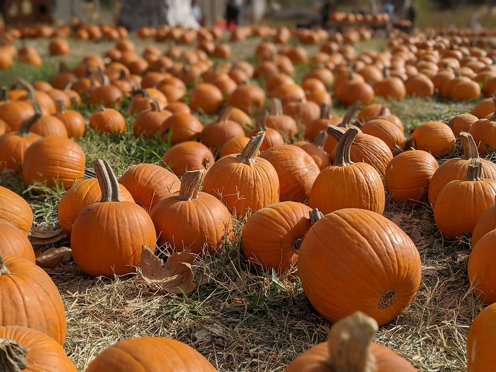 Joan's Farm & Pumpkin Patch: 4351 Mines Rd, Livermore, CA