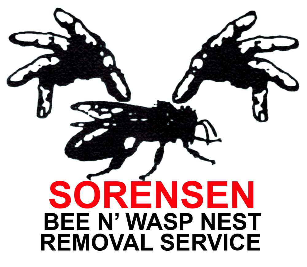 Bee & Wasp Nest Removal Service