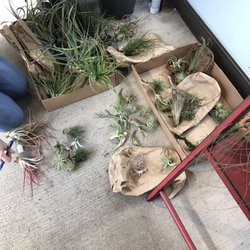 photo of jacksons home garden dallas tx united states air plants - Jacksons Home And Garden