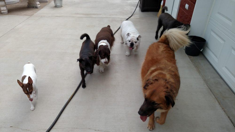 Our Home Doggy Daycare & Boarding: 1721 Gray Station Sulphur Springs Rd, Jonesborough, TN