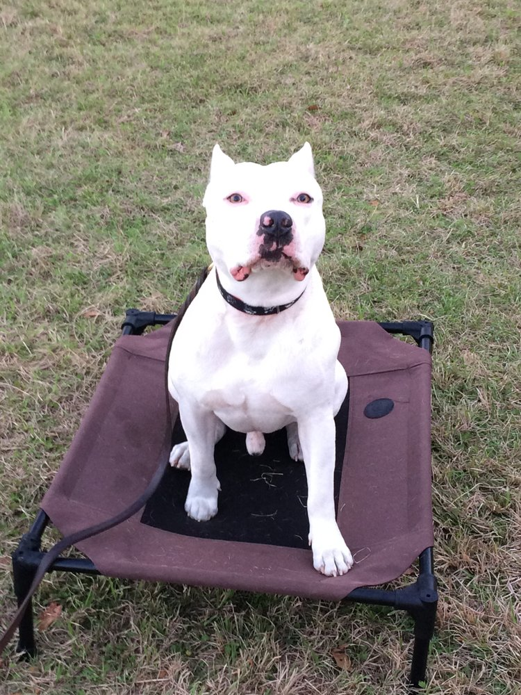 Heart of Dixie Dog Training: 20948 Homer Smith Rd, Andalusia, AL