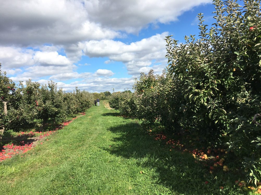Miller Orchards: 8763 Vermilion Rd, Amherst, OH