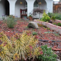 Photo Of Serenity Gardens   San Jose, CA, United States. Front Yard ~