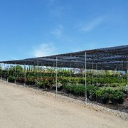 Photo Of Briggs Tree Co Whole Nursery Vista Ca United States