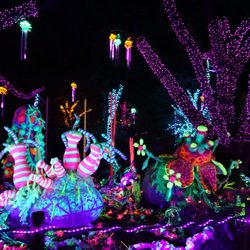 Awesome Photo Of Zoo Lights   Houston, TX, United States. Houston Zoo   Zoo Nice Ideas