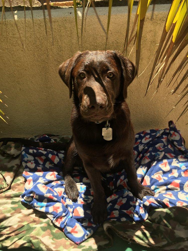 Aloha Paws Pet Sitters