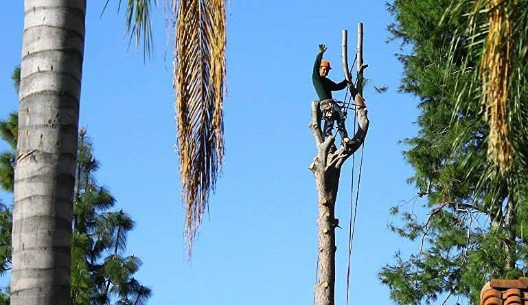 Cortez Landscaping & Tree Service: West Covina, CA
