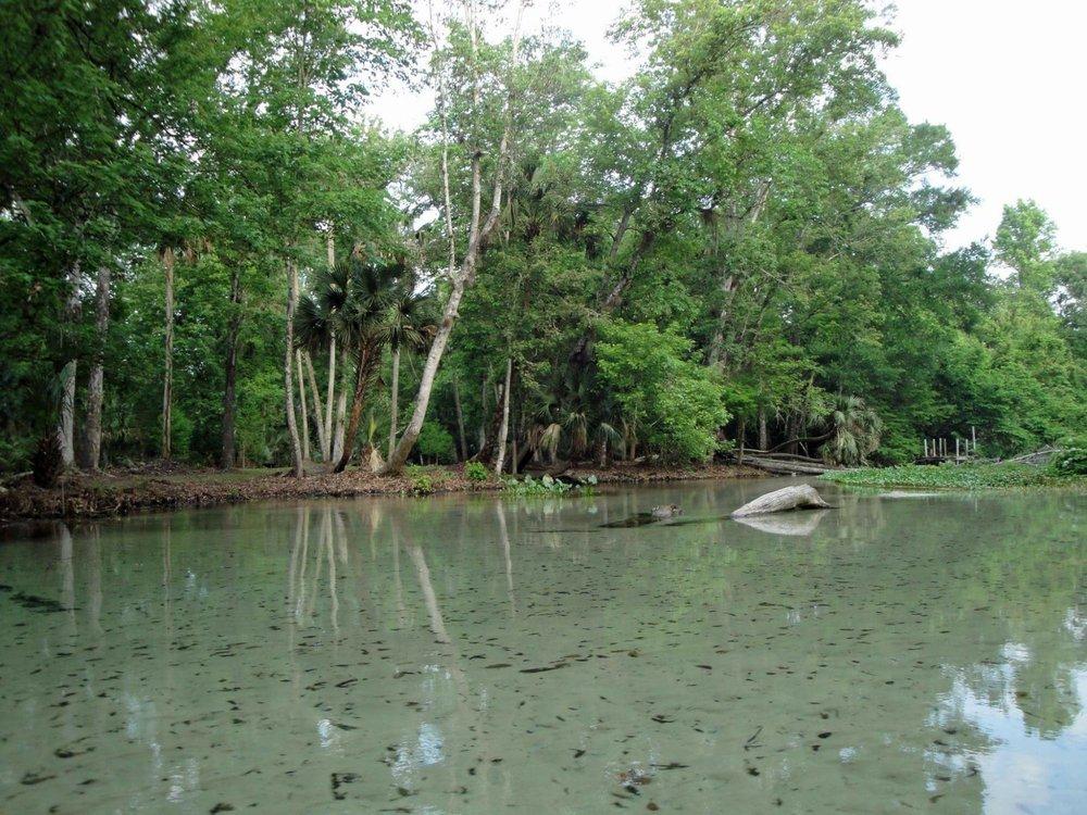 Coconut Kayak Tours: 719 Gulf Blvd, Indian Rocks Beach, FL