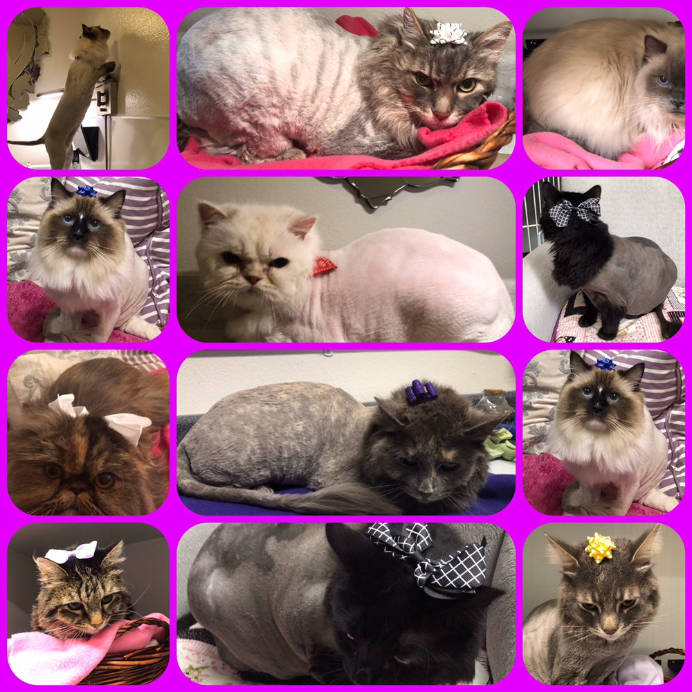 Kats Only Cat Boarding & Cat Grooming