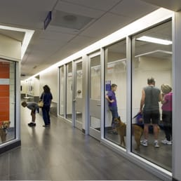Meet And Greet Rooms For Families And Adoptable Animals Yelp