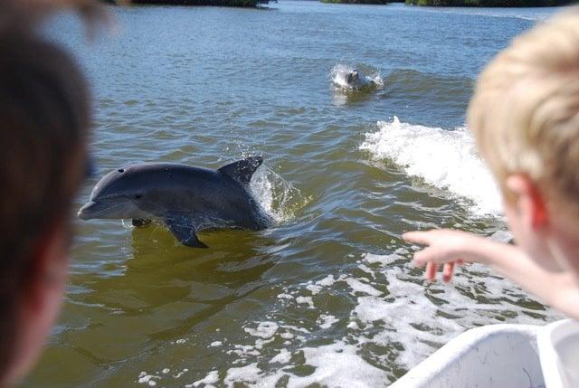 Everglades Backcountry Experience: 1125 Chokoloskee Dr, Chokoloskee, FL
