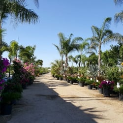 Photo Of Sun Valley Nursery   Phoenix, AZ, United States ...
