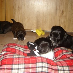 Canada dog pile