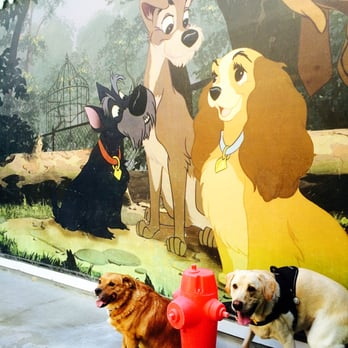 Disneyland kennel club 49 photos 107 reviews pet for Dog boarding at disney world