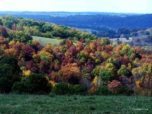 Mansfield Woods: 1431 Hicks Cave Rd, Mansfield, MO