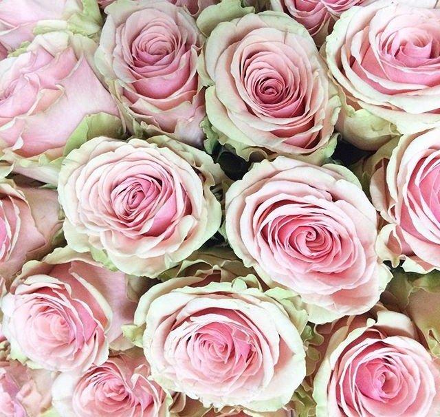 The Rose Emporium