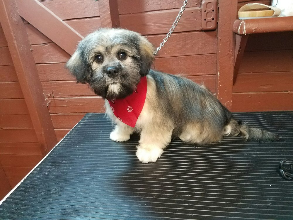 Awesome Pawz Pet Grooming: 705 Palm Ave, Holtville, CA
